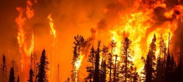 Экологический риск